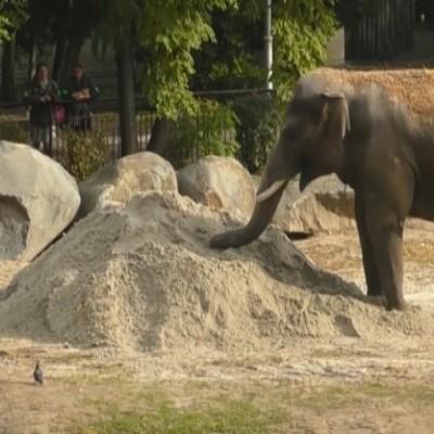 В столичном зоопарке установили песочницу для слоненка (видео)