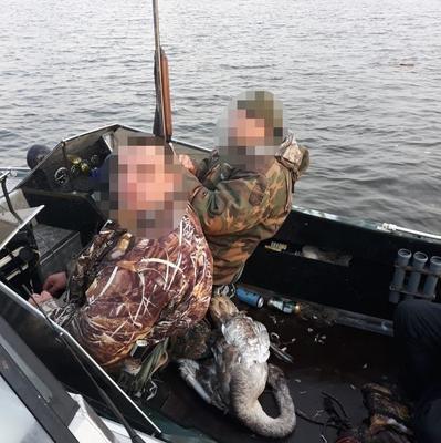 На Каневском водохранилище браконьеров уличили в убийстве лебедя. ФОТО