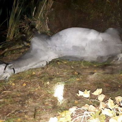 В озере на Осокорках утонул породистый конь