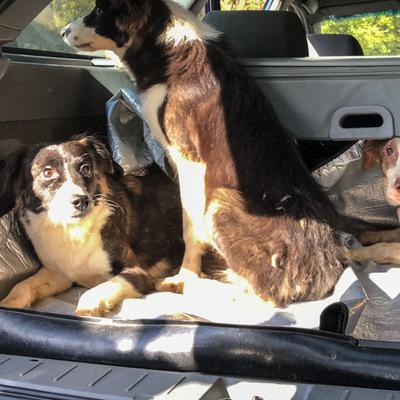 В киевской квартире годами держали запертыми 10 собак, соседи страдали от жуткого запаха