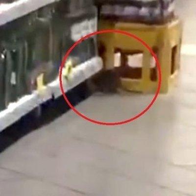 В киевском супермаркете по торговому залу бегает крыса (видео)