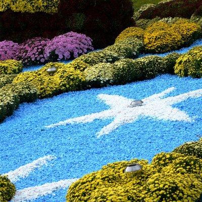 Фестиваль хризантем на Певческом поле продлили на неделю