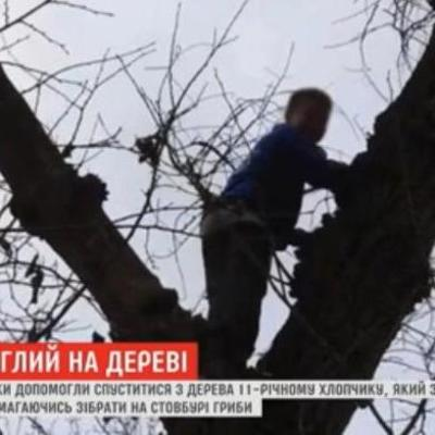 Под Днепром спасатели снимали с высокого дерева мальчика, который полез туда за грибами (видео)