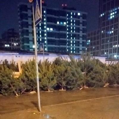 Киевлян возмутили свалки из непроданных елок