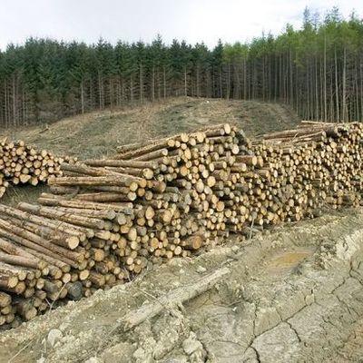 В Киевской области незаконно вырубали лес на 1,6 млн гривен