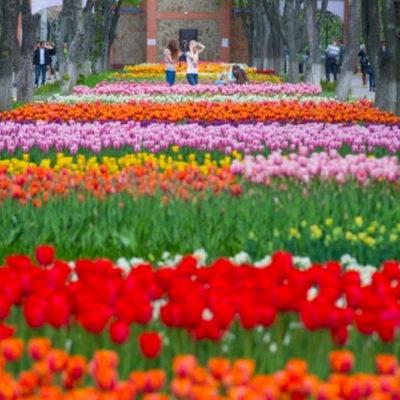 Поля цветов, озера, кемпинги, аттракционы — под Киевом создают уникальный дендропарк