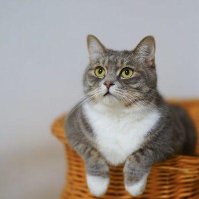 В Киеве заработал отель для кошек