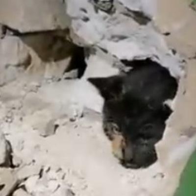 В Броварах разбили стену ради спасения кошки (видео)