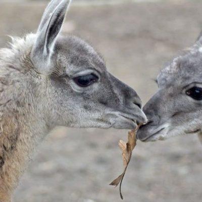 В Киевском зоопарке появились новые обитатели