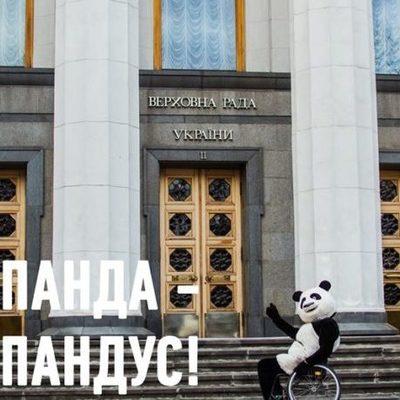 Панду прокатили Киевом в инвалидной коляске — выводы печаль
