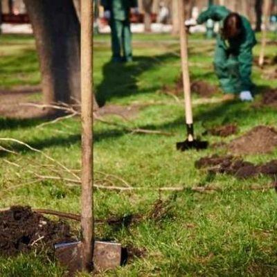 В Киеве планируют высадить 1 миллион деревьев