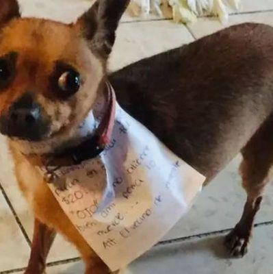 В Мексике мужчина отправил за чипсами собственного собаку, чтобы не нарушать правила карантина