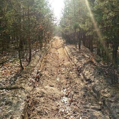 За уничтожение или повреждение объектов растительного мира предусмотрена уголовная ответственность