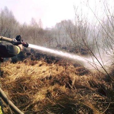 Жительница Киевской области сожгла гектар травы и 40 деревьев