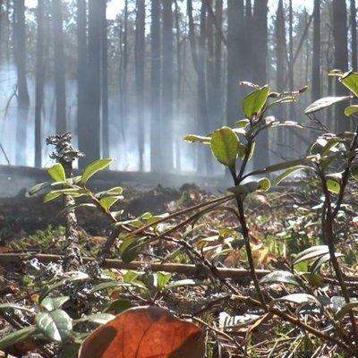 В Чернобыле из-за пожара эвакуировали самоселов: огонь не могут потушить пятые сутки