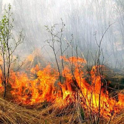 Рада ужесточила ответственность за поджоги лесов