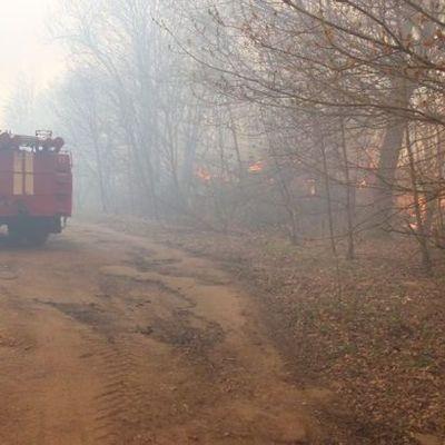В Киеве тушили 10 очагов лесных пожаров