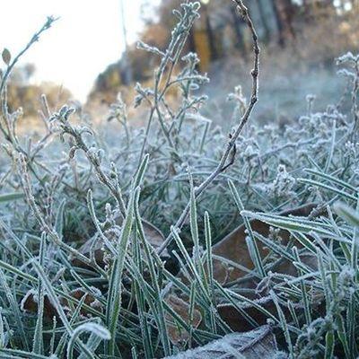 На Украину надвигаются заморозки