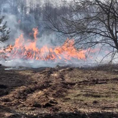 Появились тревожные данные о пожарах под Чернобылем