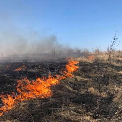 На Киевщине нацгвардейцев обвинили в поджоге травы: они набросились на свидетеля