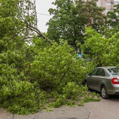 На Киев надвигается шторм: в городе объявили желтый уровень опасности