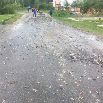 Дороги и частные дворы Броваров после дождя затянуло рыбой (фото)