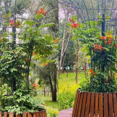 «Как в Сингапуре»: в столичном парке появились железные деревья